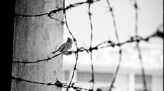 Birds on the Barbed Wire