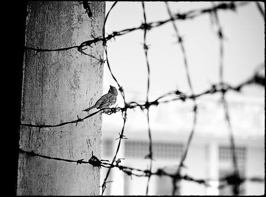 bird-on-barbed-wire